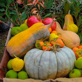 Barrow of Produce by Ruth Tomlinson - Food & Drink Fruits & Vegetables ( wheelbarrow, fruit, vegetables, pumpkin, apples,  )