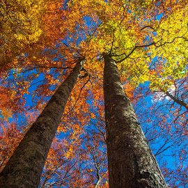 Fire in the sky by Stanislav Horacek - Nature Up Close Trees & Bushes