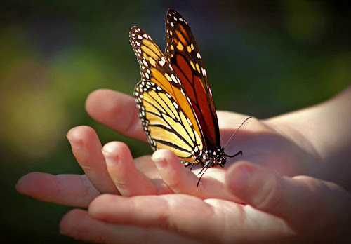 by Katie McKinney - Babies & Children Hands & Feet ( child, butterfly, macro, butterflies, monarch,  )
