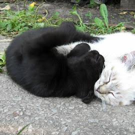 Yin and Yang are tired by Ирина Саунина - Animals - Cats Kittens ( контраст в живом мире, ;домашние животные, котята,  )