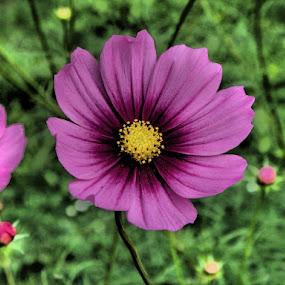 a purple flower by Libuše Kludská - Flowers Single Flower