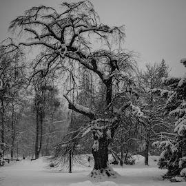 In the park by Dušan Gajšek - Nature Up Close Trees & Bushes ( _mesta, park, maribor, drevo, narava )