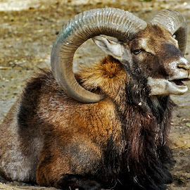 by Mohsin Raza - Animals Other Mammals (  )