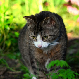Lilli by Timo Herzog - Animals - Cats Playing ( playing, new, little girl, cat, curious, garden )