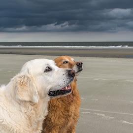Pleassssse... we've been good! by Debora Garella - Animals - Dogs Portraits