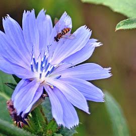 Flower by Jaliya Rasaputra - Flowers Flowers in the Wild