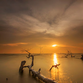 Just a wasted timber by Muhasrul Zubir - Landscapes Travel