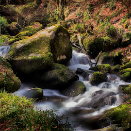 Kennall Vale by Tony Simcock Eadie - Landscapes Waterscapes ( stream, long exposure, historical, landscape, cornwall, relax, tranquil, relaxing, tranquility,  )