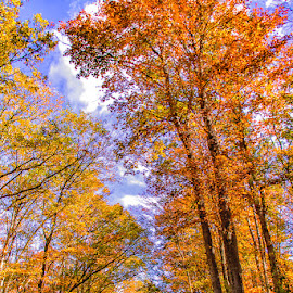 A Peaceful Autumn Walk by Carol Ward - Landscapes Forests ( lehigh gorge glen onoko, hickory run, fall colors, beltzville state park, forest, autumn trees,  )