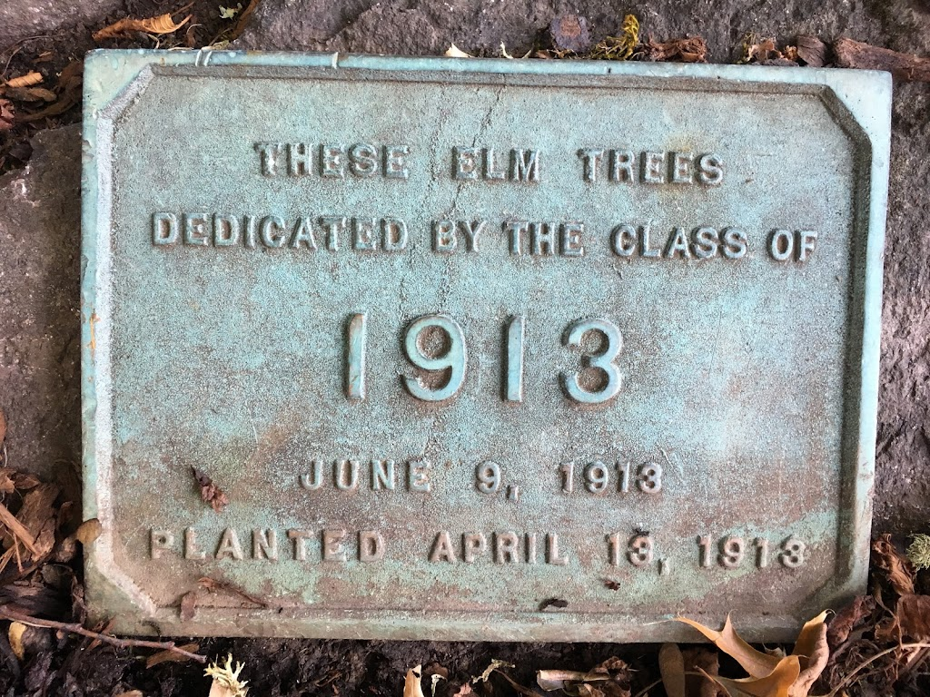 These elm trees Dedicated by the Class of 1913June 9, 1913Planted April 13, 1913