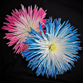 Pink and blue by Mary Gallo - Flowers Flower Arangements ( macro, nature, blue and pink flowers, flower arrangement, flowers )