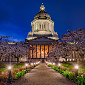 Capitol In Bloom by Scott Wood - Buildings & Architecture Public & Historical ( bluehour, washington, building, sky, twilight, trees, night, flowers, spring, capital, olympia )