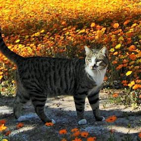 Feline Flowers by Amada Gonzalez - Animals - Cats Playing ( field, yellow flowers, cat, pet, golden )