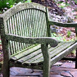 Bench AT Longwood Gardens by Roxanne Dean - Artistic Objects Furniture ( wooden, seat, green, gardens, scenic )