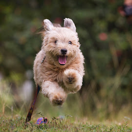 by Ryan Dominguez - Animals - Dogs Running