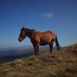 Кон by Georgi Kolev - Animals Horses ( небе., ден., летен., време., планини. )