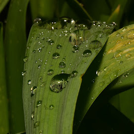 Thunderstorm. by Denton Thaves - Nature Up Close Natural Waterdrops ( water drops )