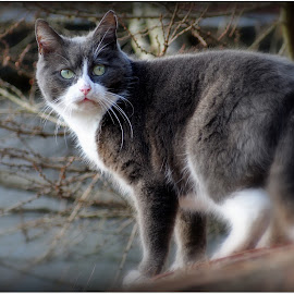 Cat on the roof by Dirk Van Esbroeck - Animals - Cats Playing