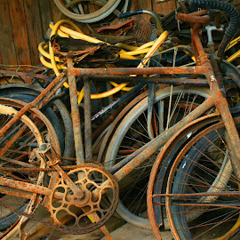 Forgotten Bicycles by Marco Bertamé - Transportation Bicycles (  )