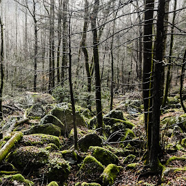 Woods in Winter by Richard Michael Lingo - Landscapes Forests ( winter, trees, forest, landscape, woods,  )