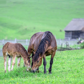 Mother love by Marius Turc - Animals Horses