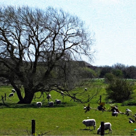 A Field in Ashford by Roger Booton - Digital Art Places ( field, grass, kent, meadow, ashford, trees, sheep, landscape, digital, watercolour )