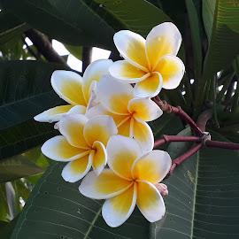 by Sukamal Biswas - Flowers Flower Gardens