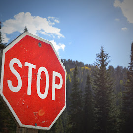 Forest Stop by Jacqueline Newman - Artistic Objects Signs ( utah, mountain, signs, forests )