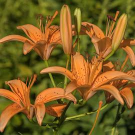 by Judy Florio - Flowers Flower Gardens