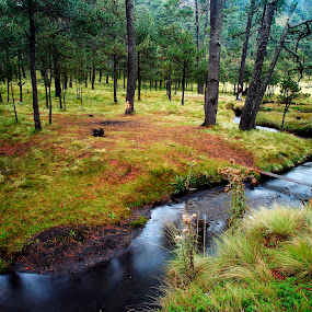 Grass and river by Cristobal Garciaferro Rubio - Landscapes Prairies, Meadows & Fields ( water, pines, mood, trees, pine, river )
