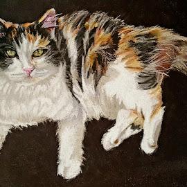 Fluffy cat by Lyndsay Hepburn - Drawing All Drawing ( pastelanimaldrawing, animalportrait, fluffycatdrawing, whitebrownandblackfluffycat, catportrait )