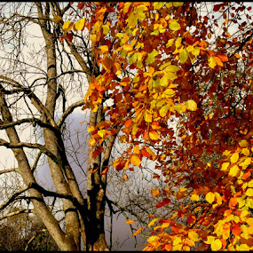 Autumn Burst   by Paul White - Nature Up Close Trees & Bushes ( autumn, the lakes )