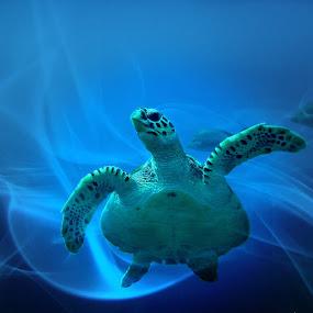 Turtle by Jackson Visser - Digital Art Things ( underwater, swirl, sea, ocean, turtle )