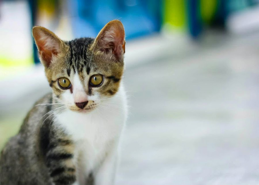 Where's my mama? :( by Fazrul Mustaqim - Animals - Cats Kittens ( cats, kitten, stare, focus, cute, eyes )