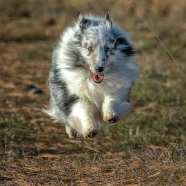 by James Harrison - Animals - Dogs Running