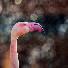 Dream of a Pink Bird by Jiri Cetkovsky - Animals Birds ( bird, zoo, drops, pink, bokeh, pelican )