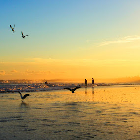 Birds by Tyhe Reading - Landscapes Beaches ( water, colour, clouds, reflection, sky, sunset, birds, light )