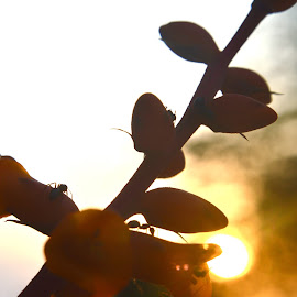 Little workers by Zurica Ribeiro - Novices Only Flowers & Plants ( nature, ants, golden hour )