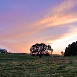 Saturday night light. by Jim Dawson - Novices Only Landscapes ( farm, tree, barn, sunset, landscape )