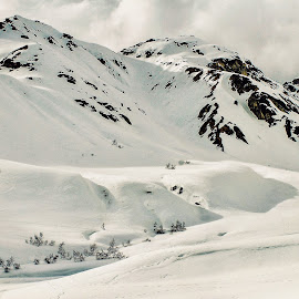 Snowy  by Patricia Phillips - Landscapes Mountains & Hills ( alaska mountains talkeetna )