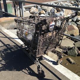 RETRIEVED RUBBISH! by Dawn Simpson - City,  Street & Park  Neighborhoods ( barnacles, rubbish, garbage, grocery trolley )
