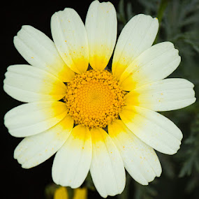 by Mi Mundo - Nature Up Close Flowers - 2011-2013 ( flower )