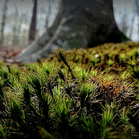 Somewhere by Bogdan Berbec - Instagram & Mobile Android ( forest floor, grass, nature up close )