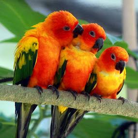 happy three friends... by Awai Bucchi - Animals Birds