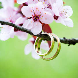 Wedding rings closeup with pink cherry flowers by Cornel Achirei - Wedding Details ( plant, bouquet, gift, jewelry, spring, blossom, love, macro, married, event, couple, pink, gold, passion, flower, closeup, petal, ring, anniversary, symbol, church, green, beautiful, romantic, ceremony, holiday, two, cherry, arrangement, wedding, background, celebration, day, floral, religious, engagement )