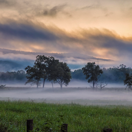 Morning Mist by Michael Buffington - Landscapes Weather ( environment, nature, fog, weather, morning, landscape, natural, mist )