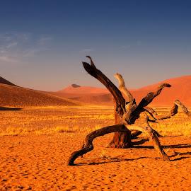Namib Desert by Stanley P. - Landscapes Deserts