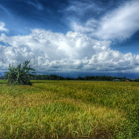 some where in ranah minang by Elvis Hendri - Instagram & Mobile Android ( field, clouds, instagram, mobile photos, indonesia, landscape, natural, photography, country )