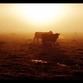 Sunrise through the fog by Sassine El Nabbout - Landscapes Sunsets & Sunrises (  )