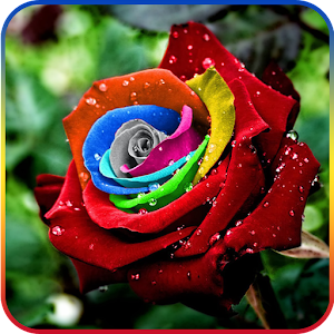 Download Rose Day Live Wallpaper for Windows Phone